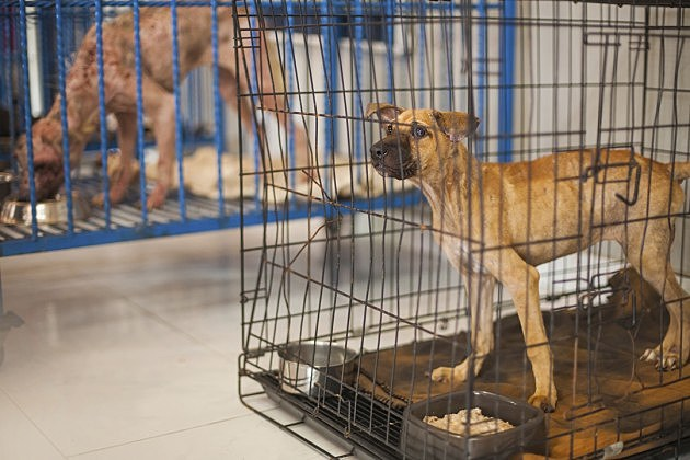 dog in quarantine