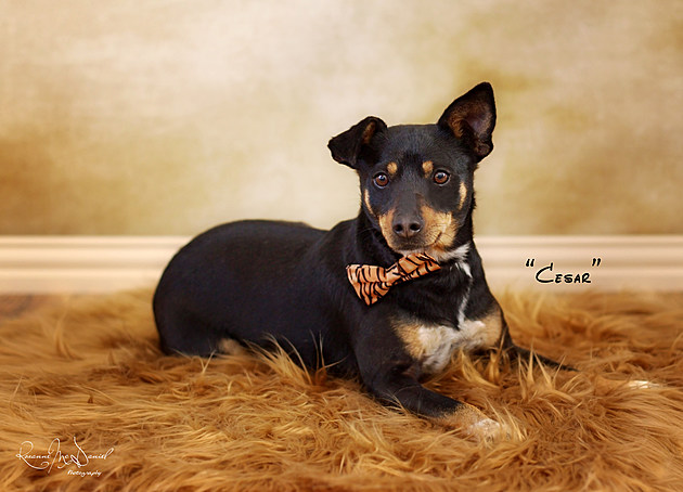 Awesome pet of the week Cesar