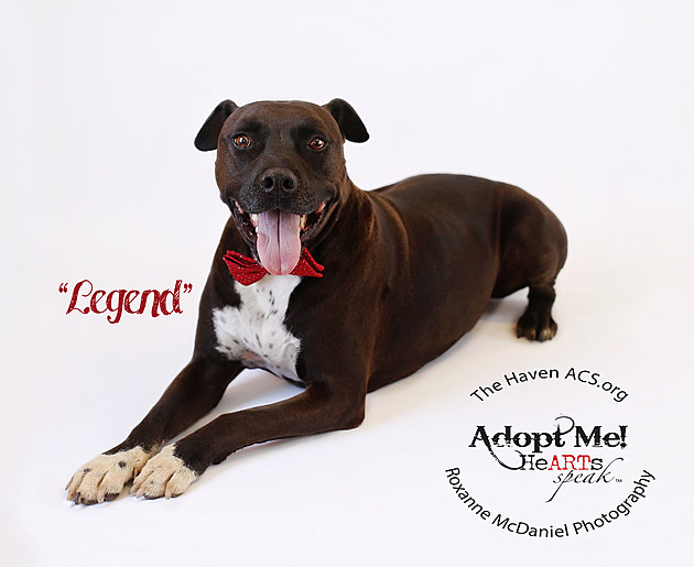 Legend, Awesome Pet of the Week